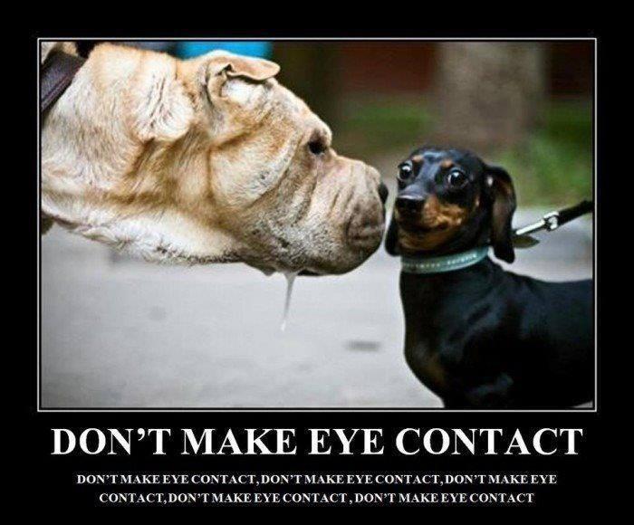 Dog - DON'T MAKE EYE CONTACT DON'T MAKE EYE CONTACT, DONTMAKE EYE CONTACT,DON'T MAKE EYE CONTACT, DON'T MAKE EYE CONTACT, DON'T MAKE EYE CONTACT