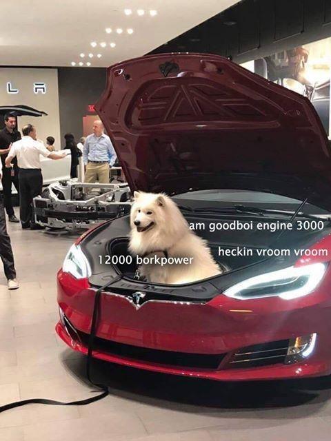 Car - L A am goodboi engine 3000 heckin vroom vroom 12000 borkpower