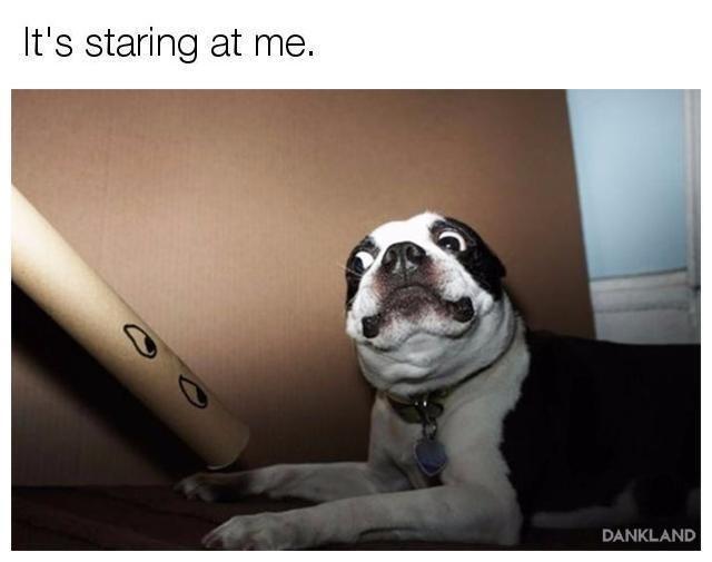 Dog - It's staring at me. DANKLAND