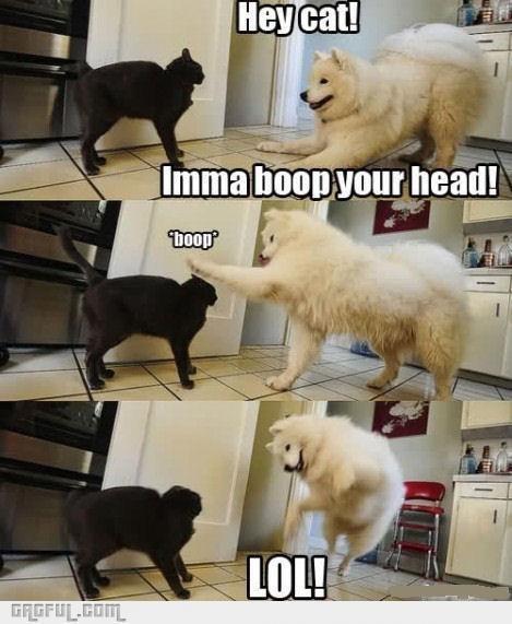 Vertebrate - Неу cat! Imma boop your head! boop LOL! GRGFUL.Com