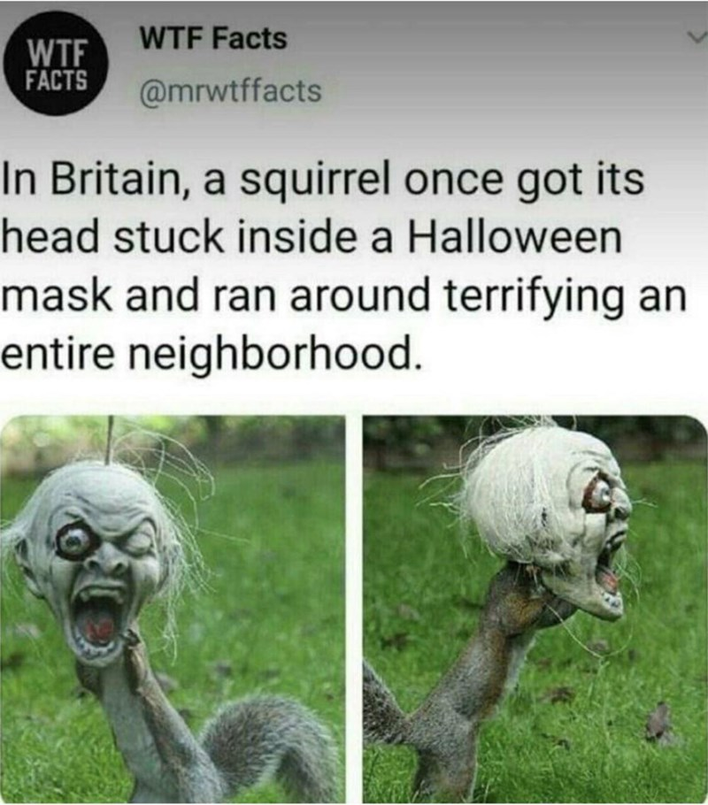 Mammal - WTF Facts WTF FACTS @mrwtffacts In Britain, a squirrel once got its head stuck inside a Halloween mask and ran around terrifying an entire neighborhood.