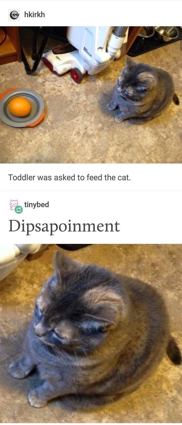 Cat - hkirkh Toddler was asked to feed the cat. tinybed Dipsapoinment
