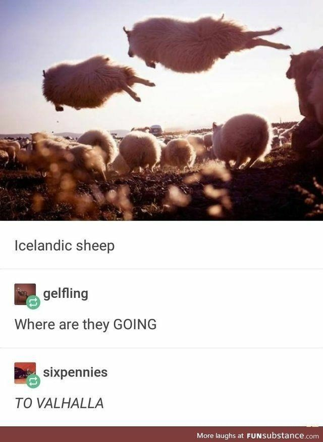 Light - Icelandic sheep gelfling Where are they GOING sixpennies TO VALHALLA More laughs at FUNSubstance.com