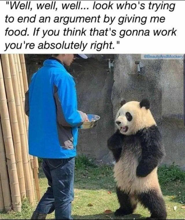 """Panda - """"Well, well, well... look who's trying to end an argument by giving me food. If you think that's gonna work you're absolutely right."""" @BeautyAndMockery"""