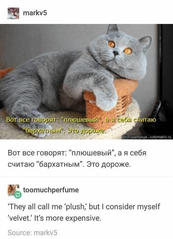 "Cat - markv5 Вот все говорят: ""плюшевый"", а я себя снитаю ""барҳагным"", Это дороже. KoTOmaTonue - kotomatrix ru Вот все говорят: ""плюшевый"", а я себя считаю ""бархатным"". Это дороже. toomuchperfume 'They all call me 'plush, but I consider myself 'velvet.' It's more expensive. Source: markv5"