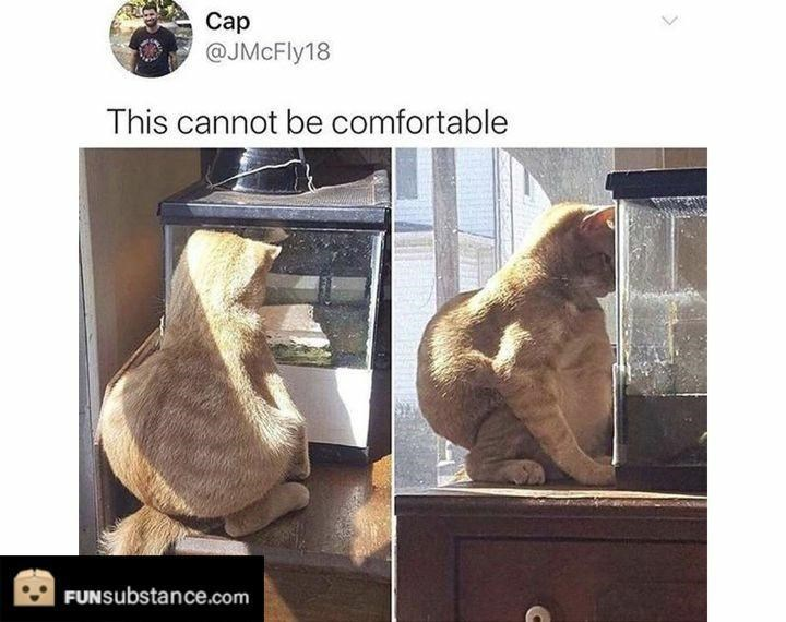 Jaw - Сар @JMcFly18 This cannot be comfortable FUNSubstance.com