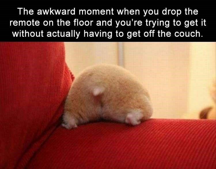 Felidae - The awkward moment when you drop the remote on the floor and you're trying to get it without actually having to get off the couch.