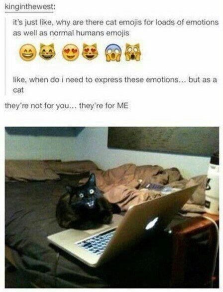 Cat - kinginthewest: it's just like, why are there cat emojis for loads of emotions as well as normal humans emojis like, when do i need to express these emotions... but as a cat they're not for you... they're for ME