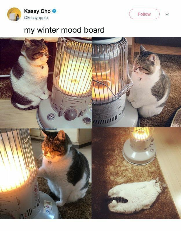 Cat - Kassy Cho O @kassyapple Follow my winter mood board