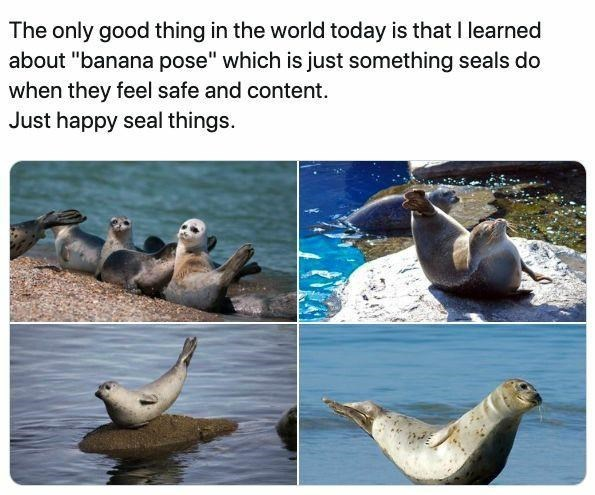 """Water - The only good thing in the world today is that I learned about """"banana pose"""" which is just something seals do when they feel safe and content. Just happy seal things."""
