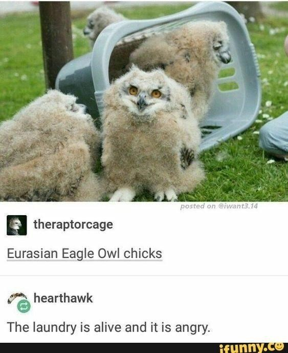Dog - posted on @iwant3.14 theraptorcage Eurasian Eagle Owl chicks hearthawk The laundry is alive and it is angry. ifunny.co