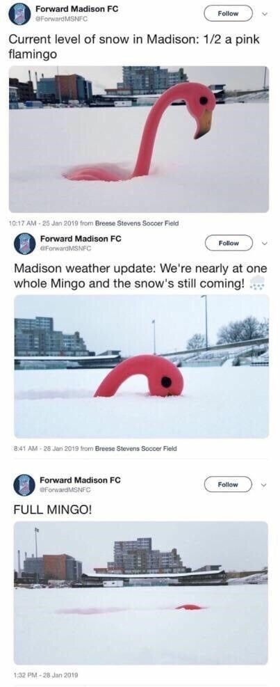 White - Forward Madison FC Follow OForwardMSNFC Current level of snow in Madison: 1/2 a pink flamingo 10:17 AM - 25 Jan 2019 from Breese Stevens Soccer Field Forward Madison FC Follow OForwardMSNFC Madison weather update: We're nearly at one whole Mingo and the snow's still coming! 8:41 AM - 28 Jan 2019 from Breese Stevens Soccer Field Forward Madison FC OForwardMSNFC Follow FULL MINGO! 1:32 PM.- 28 Jan 2019