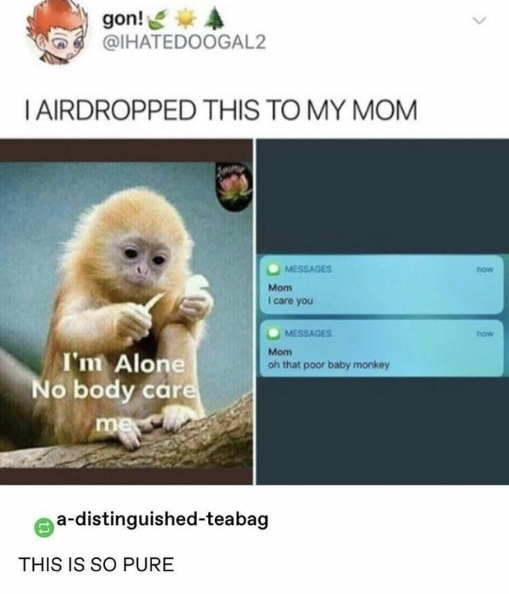 Primate - gon! @IHATEDOOGAL2 T AIRDROPPED THIS TO MY MOM Amm MESSAGES now Mom I care you MESSAGES now I'm Alone No body care Mom oh that poor baby monkey me a-distinguished-teabag THIS IS SO PURE