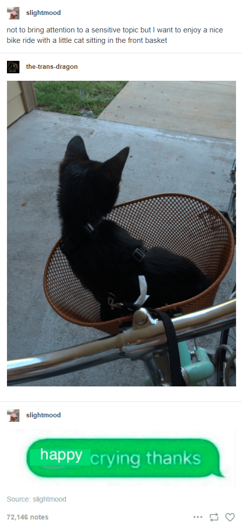 Cat - slightmood not to bring attention to a sensitive topic but I want to enjoy a nice bike ride with a little cat sitting in the front basket the-trans-dragon slightmood happy crying thanks Source: slightmood 72,146 notes