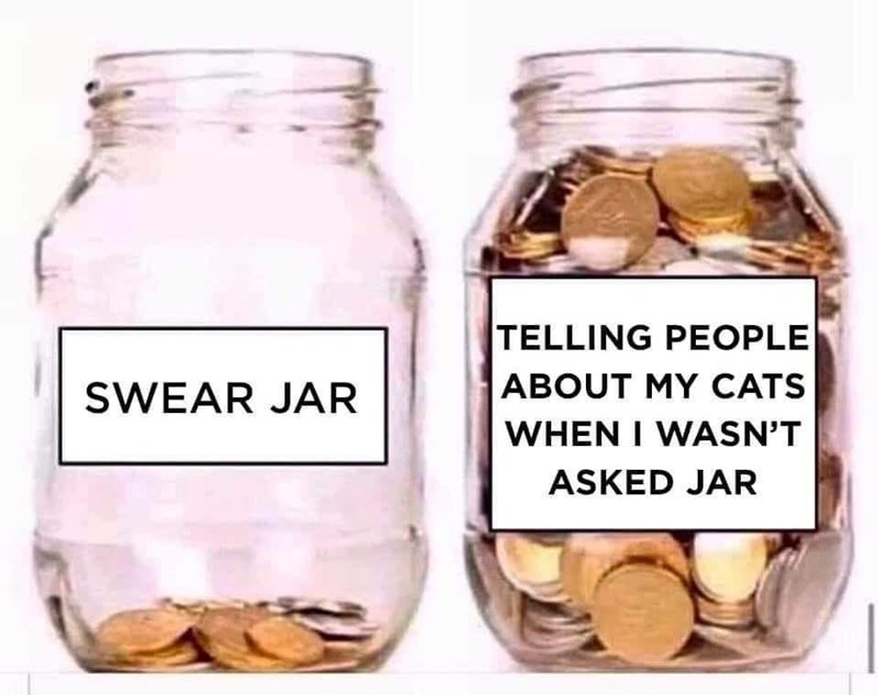 Food - TELLING PEOPLE ABOUT MY CATS WHEN I WASN'T SWEAR JAR ASKED JAR