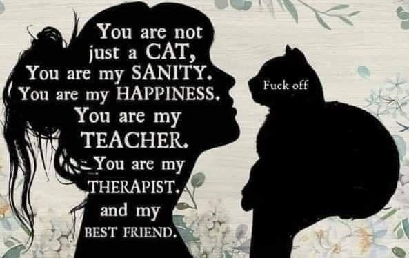 Hairstyle - You are not just a CAT, You are my SANITY. You are my HAPPINESS. You are my Fuck off TEACHER. You are my THERAPIST. and my BEST FRIEND.