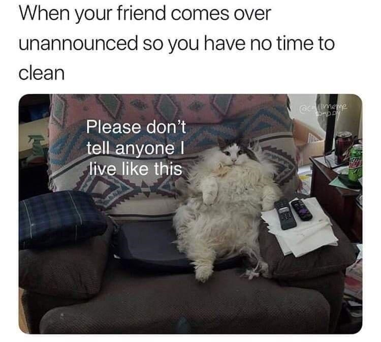 Product - When your friend comes over unannounced so you have no time to clean eimene Please don't tell anyone I live like this