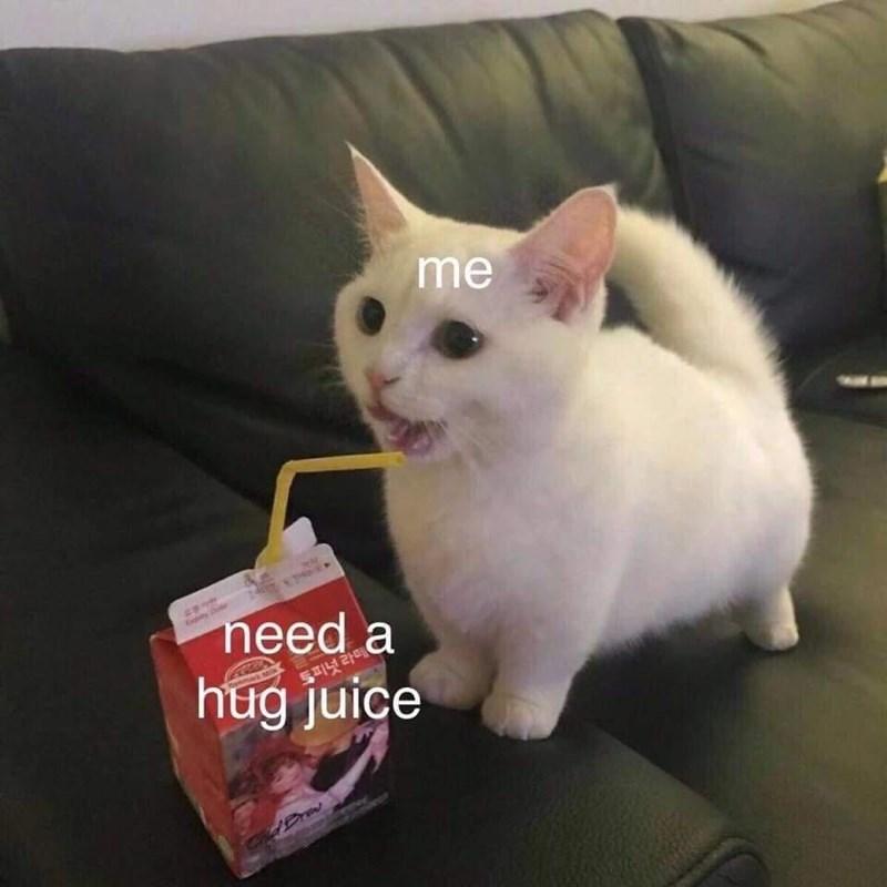 Cat - me need a hug juice Enpiny 토피넛 라떼