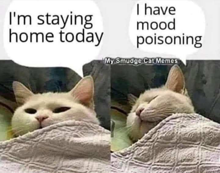 Cat - I'm staying home today I have mood poisoning My Smudge Cat Memes