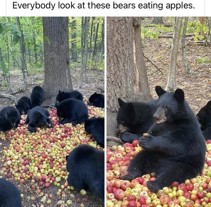 Plant - Everybody look at these bears eating apples.