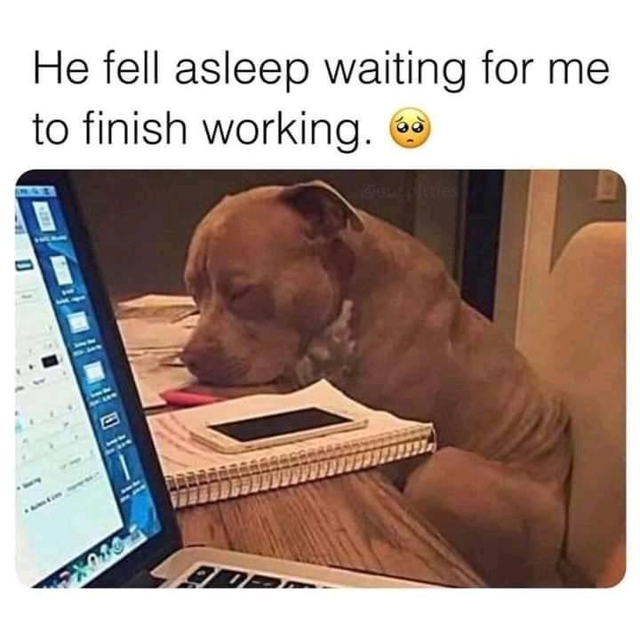 Dog - He fell asleep waiting for me to finish working. 日一