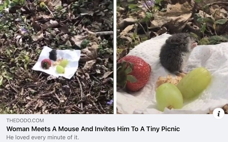 Food - THEDODO.COM Woman Meets A Mouse And Invites Him To A Tiny Picnic He loved every minute of it.