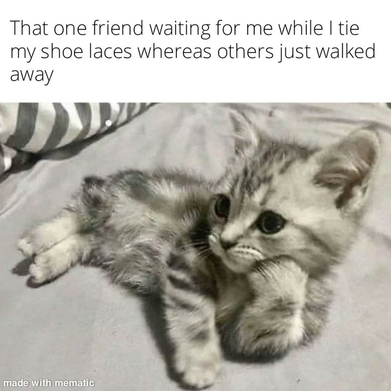 Cat - That one friend waiting for me while I tie my shoe laces whereas others just walked away made with mematic