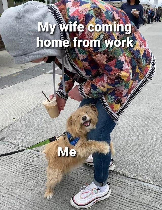 Dog - My wife coming home from work Me