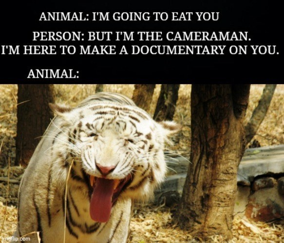 Roar - ANIMAL: I'M GOING TO EAT YOU PERSON: BUT I'M THE CAMERAMAN. I'M HERE TO MAKE A DOCUMENTARY ON YOU. ANIMAL: ingflip.com