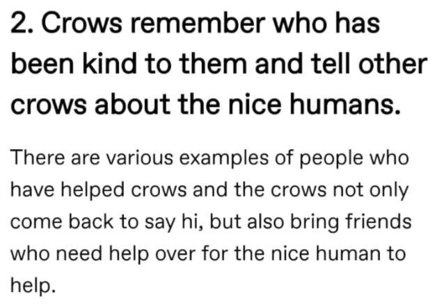 Font - 2. Crows remember who has been kind to them and tell other crows about the nice humans. There are various examples of people who have helped crows and the crows not only come back to say hi, but also bring friends who need help over for the nice human to help.
