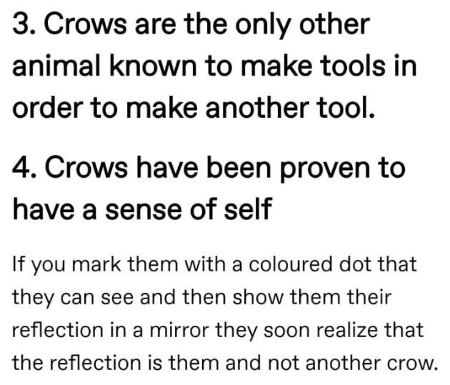 Font - 3. Crows are the only other animal known to make tools in order to make another tool. 4. Crows have been proven to have a sense of self If you mark them with a coloured dot that they can see and then show them their reflection in a mirror they soon realize that the reflection is them and not another crow.