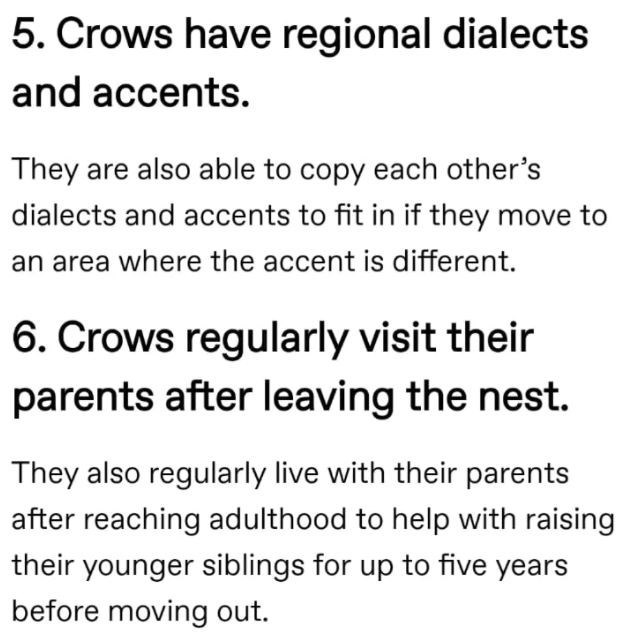 Font - 5. Crows have regional dialects and accents. They are also able to copy each other's dialects and accents to fit in if they move to an area where the accent is different. 6. Crows regularly visit their parents after leaving the nest. They also regularly live with their parents after reaching adulthood to help with raising their younger siblings for up to five years before moving out.