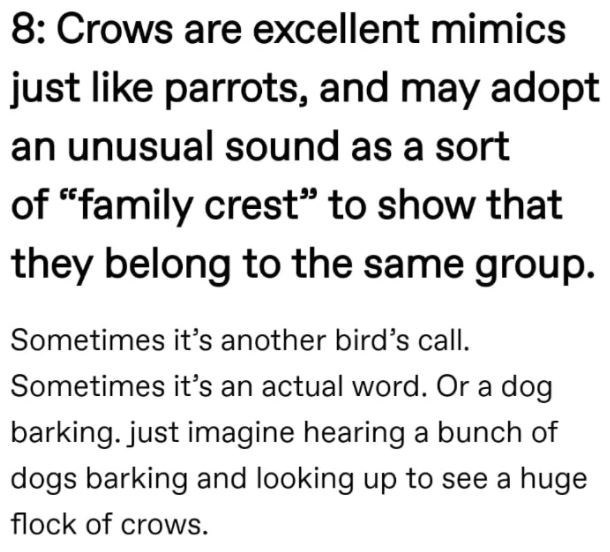 """Font - 8: Crows are excellent mimics just like parrots, and may adopt an unusual sound as a sort of """"family crest"""" to show that they belong to the same group. Sometimes it's another bird's call. Sometimes it's an actual word. Or a dog barking. just imagine hearing a bunch of dogs barking and looking up to see a huge flock of crows."""