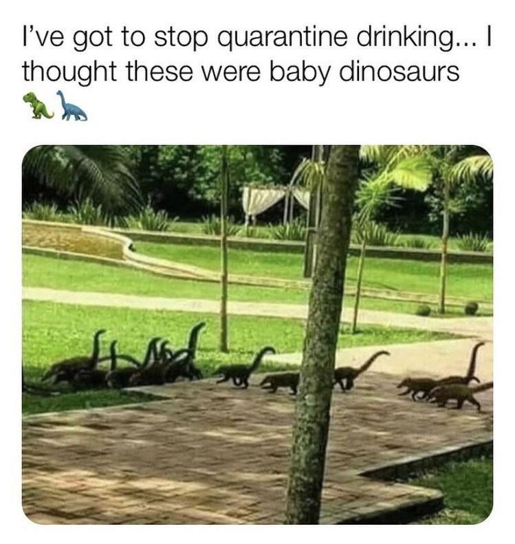 Plant - I've got to stop quarantine drinking... I thought these were baby dinosaurs
