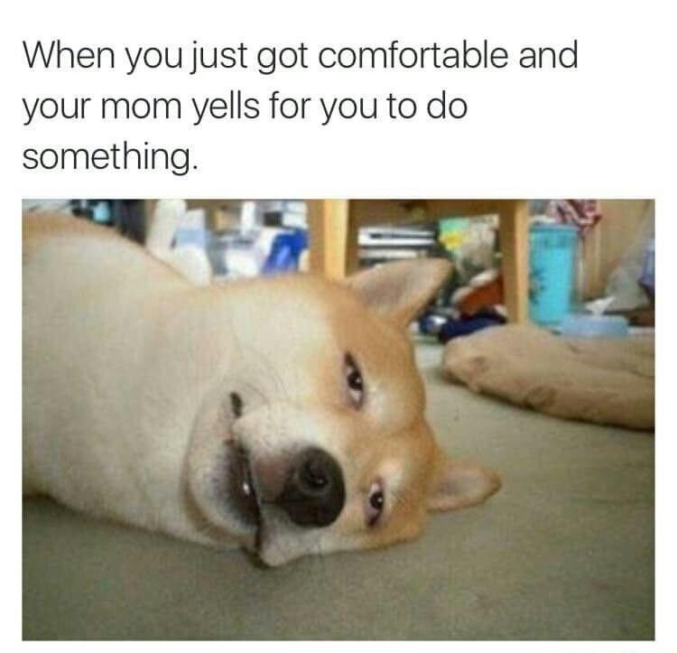 Dog - When you just got comfortable and your mom yells for you to do something.