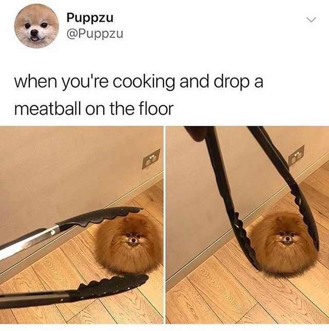 Product - nzddnd @Puppzu when you're cooking and drop a meatball on the floor
