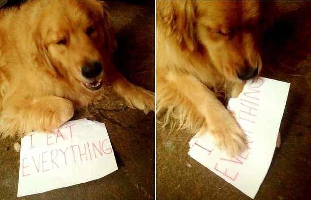 Dog - I EAT EVERYTHING NIH
