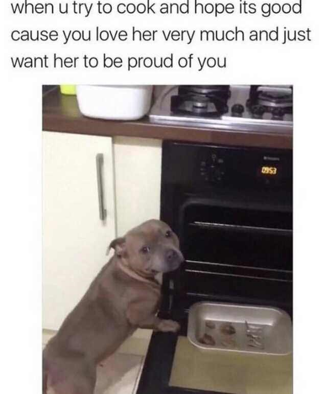Dog - when u try to cook and hope its good cause you love her very much and just want her to be proud of you 0953
