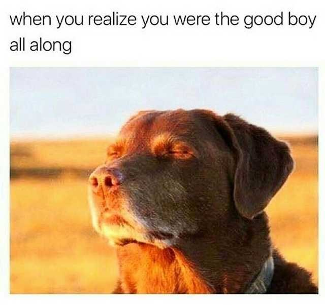 Dog - when you realize you were the good boy all along