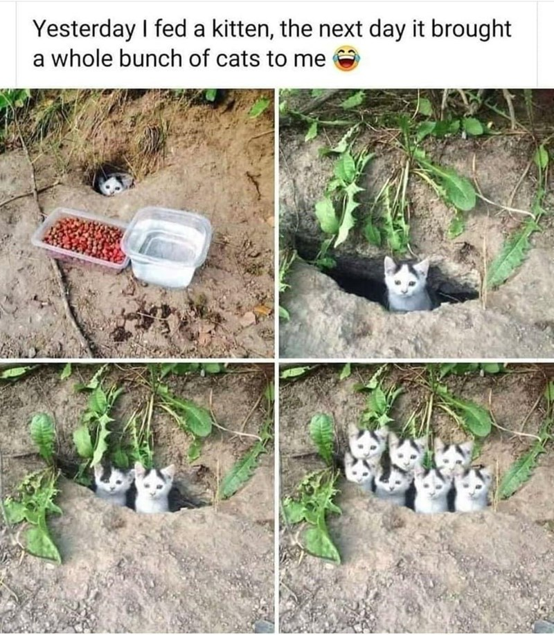 Nature - Yesterday I fed a kitten, the next day it brought a whole bunch of cats to me