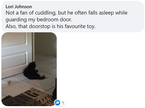 Felidae - Lori Johnson Not a fan of cuddling, but he often falls asleep while guarding my bedroom door. Also, that doorstop is his favourite toy. 1
