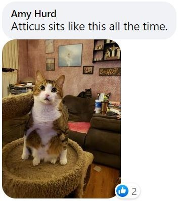 Furniture - Amy Hurd Atticus sits like this all the time. Befill