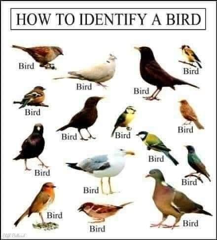 Bird - HOW TO IDENTIFY A BIRD Bird Bird Bird Bird Bird Bird Bird Bird Bird Bird Bird Bird Bird Bird Bird