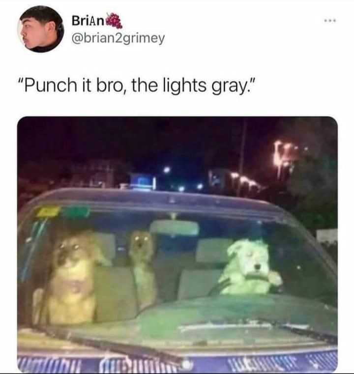 """Car - Brian @brian2grimey """"Punch it bro, the lights gray."""""""