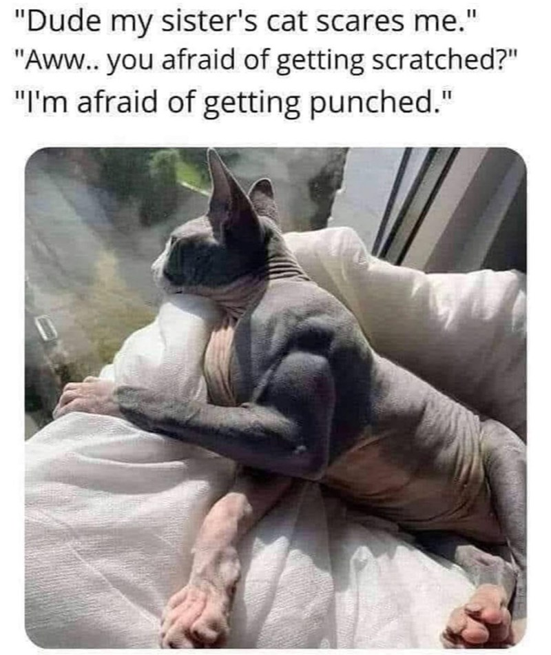 """Vertebrate - """"Dude my sister's cat scares me."""" """"Aww. you afraid of getting scratched?"""" """"I'm afraid of getting punched."""""""
