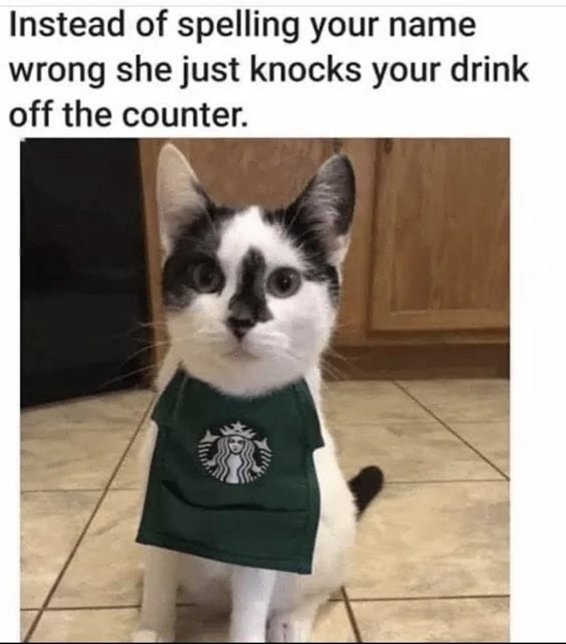 Cat - Instead of spelling your name wrong she just knocks your drink off the counter.