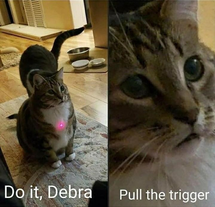 Cat - Do it, Debra Pull the trigger