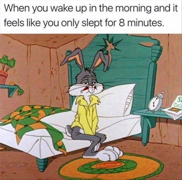 Vertebrate - When you wake up in the morning and it feels like you only slept for 8 minutes. S Cat