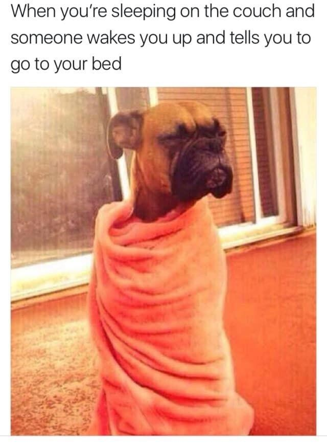 Dog - When you're sleeping on the couch and someone wakes you up and tells you to go to your bed