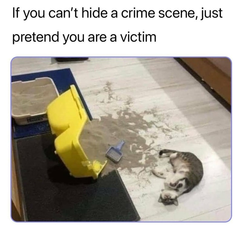 Cat - If you can't hide a crime scene, just pretend you are a victim